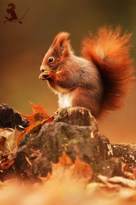 Quoi de plus mignon qu'un écureuil ?