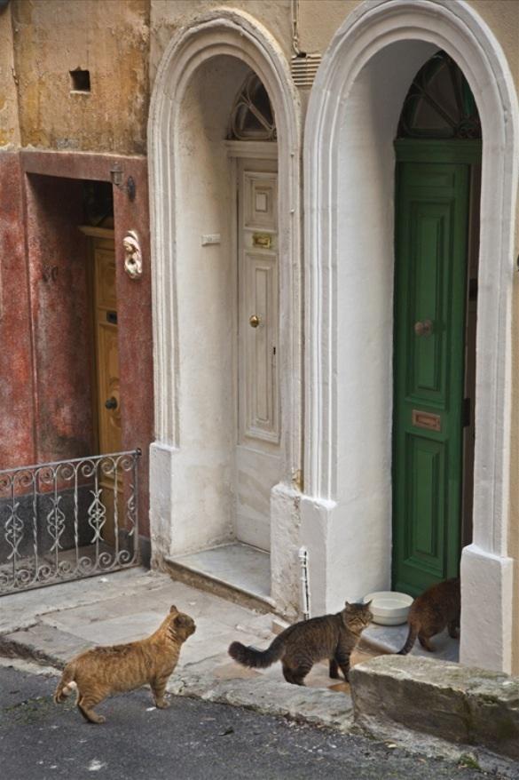 Cats of Malta (via  Fernando Conde)