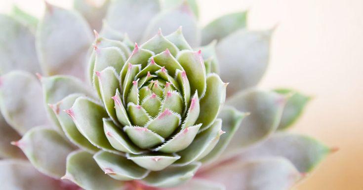 Più di 25 fantastiche idee su Coltivare Piante Grasse su Pinterest  Piante g...