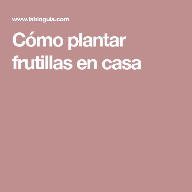 Cómo plantar frutillas en casa