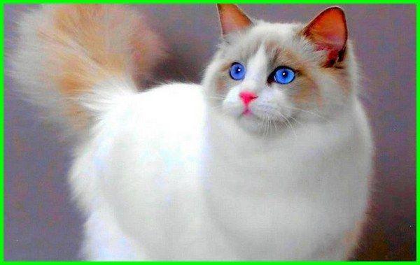 Download 87+  Gambar Kucing Yang Lucu Imut Imut Gratis