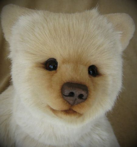 spirit bear cub | ... SOLD ] Tarlo, a Kermode 'Spirit' Bear cub by 'Bear' Bottoms Originals