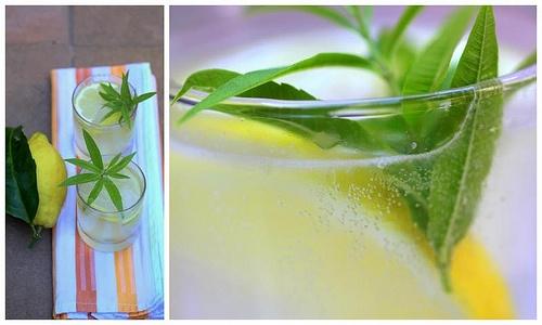 """Mint """"Limonata"""" Recipe — Dishmaps"""