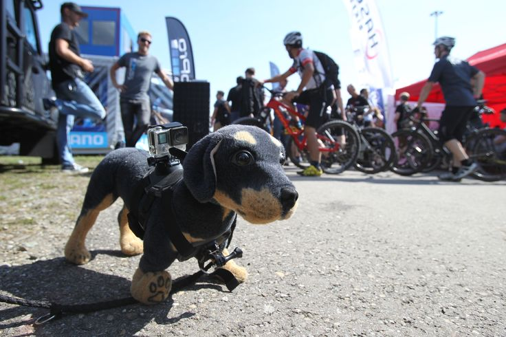 Little puppy overseeing all the happenings at Eurobike 2015.