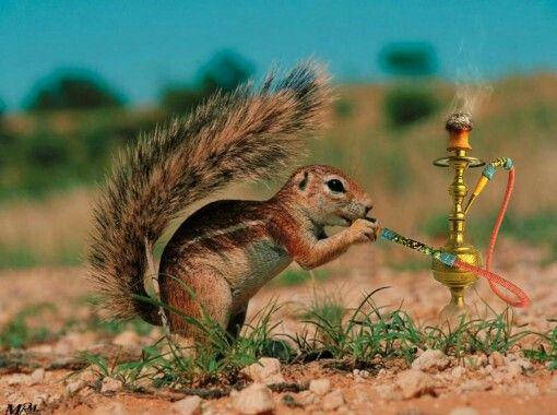 Eichhörnchen Witzig