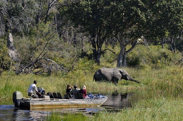 Boating from Xigera Camp, Okavango Delta