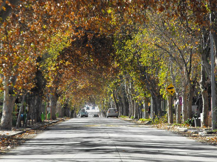 Paseos en el Valle del Acocnagua  Santa María  http://cumbrenueva.cl/index.html
