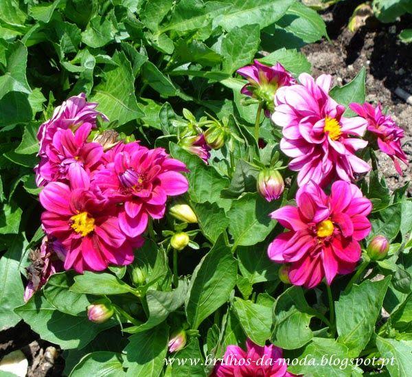 Brilhos da Moda: Flores, uma maravilha da natureza # 39