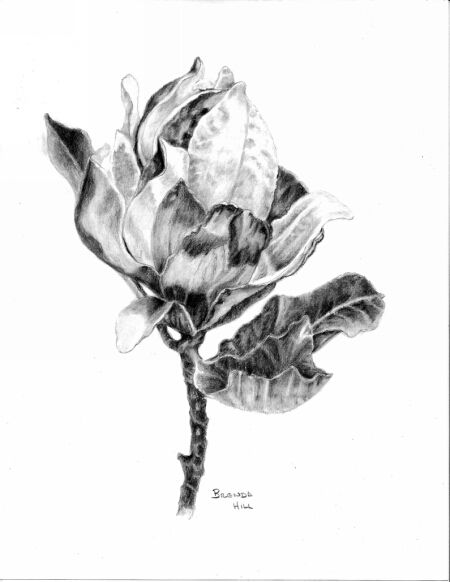 Magnolia by Brenda Hill