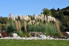 Gräser eignen sich auch sehr gut als Sichtschutz. Kombinieren Sie dazu am besten unterschiedlich hochwachsende Ziergräser.