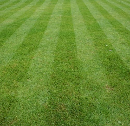 Our Lawn Care service is available in Ascot, Camberley, Crowthorne, Sunningdale, Virginia Water, Winkfield, Windlesham and Wokingham