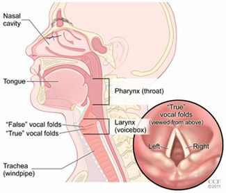 What is LPR?  LPR is a condition that occurs in a person who has gastroesophageal reflux disease (GERD). Acid made in the stomach travels up the esophagus (swallowing tube). When that stomach acid gets to the throat, it is called laryngopharyngeal reflux (LPR).
