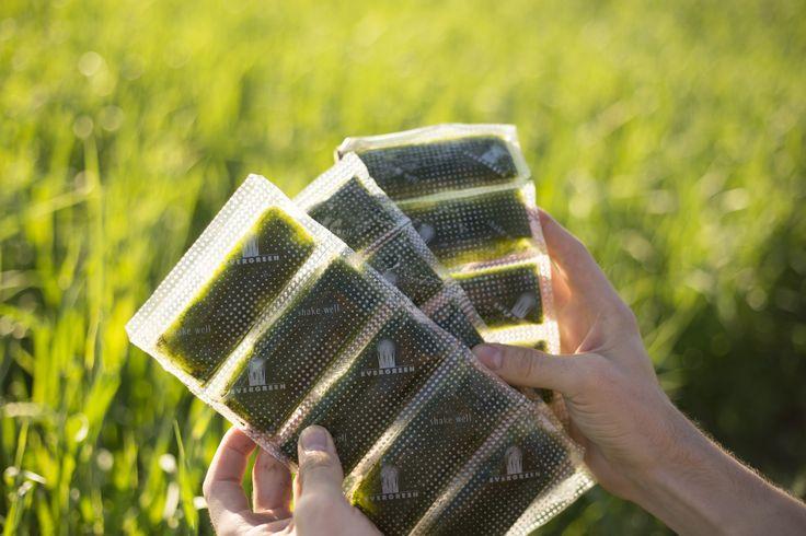 Harvest - Evergreen Juices