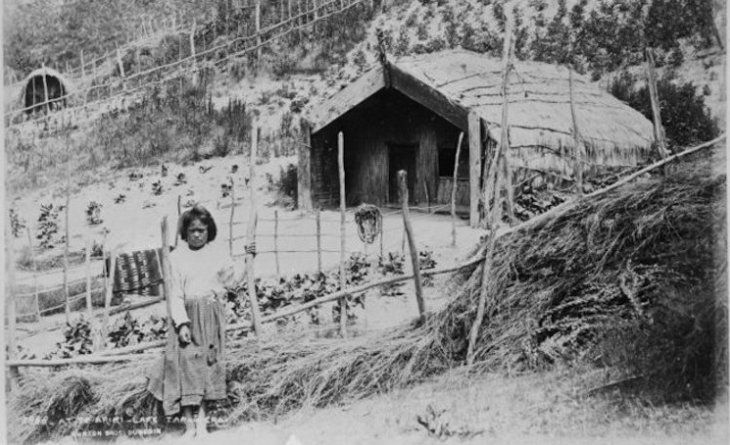Māori soil science   When Māori first arrived in New Zealand, they used observation and experimentation to grow food crops like kūmara in different soils with a colder climate.