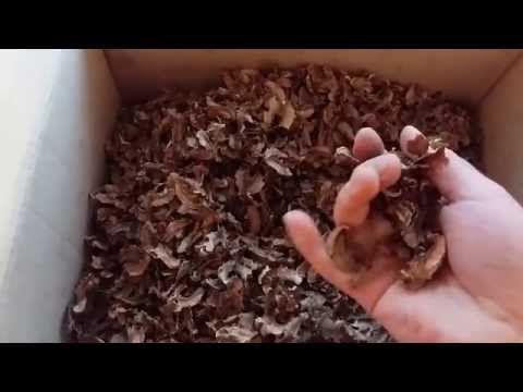 Перегородки грецких орехов - YouTube