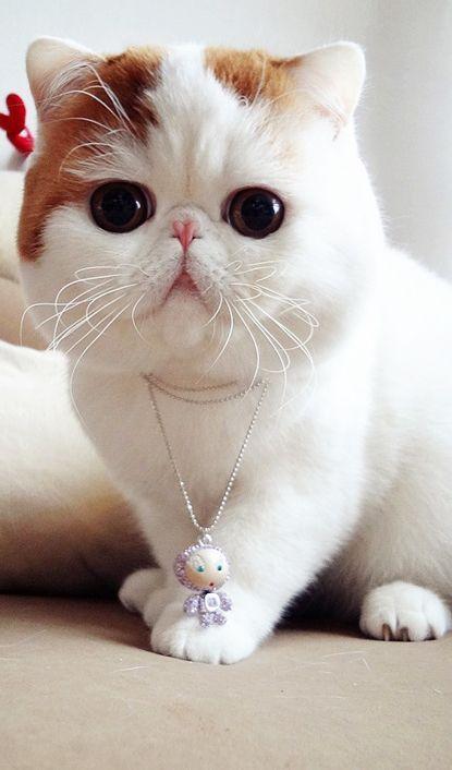 Entzückende Katzentiere Tippen Sie auf den Link, um eine großartige Auswahl an Katzen- und Kätzchenproduk …   – cats^^ /animals