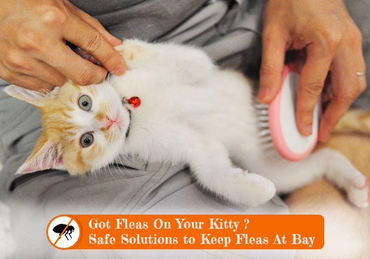 Keys To Cat Flea Control - Safe #Solutions To Keep #Fleas Off #Cat -