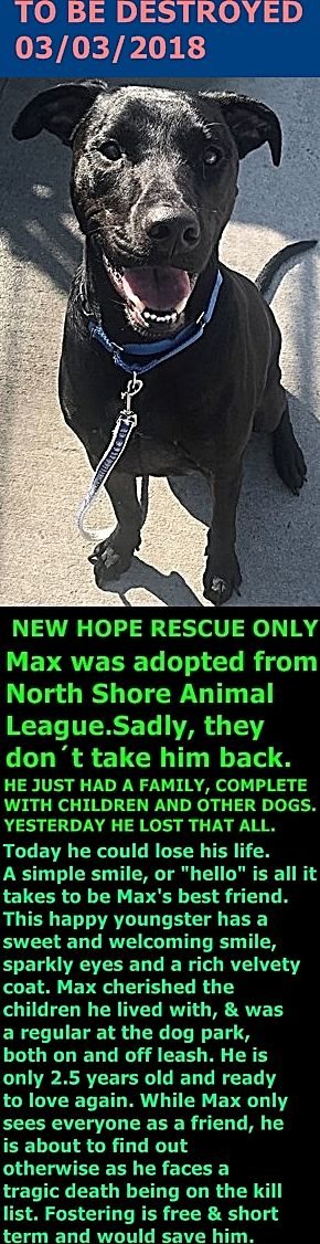 Hello, my name is Max. My animal id is #21031. I am a desexed male black dog at the Brooklyn Center. The shelter thinks I am about 2 years 7 months old. I came into as a owner surrender on 18-Feb-2018, surrender reason was animal behaviour – aggressive to other animals. http://nycdogs.urgentpodr.org/max-21031/