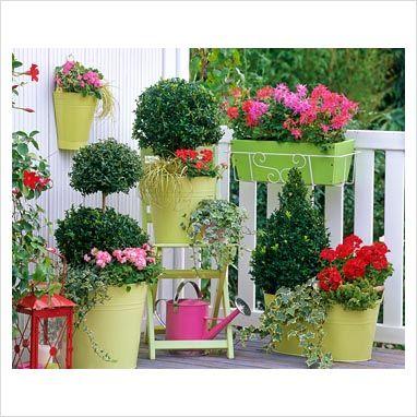 una linda mezcla de plantas y macetas