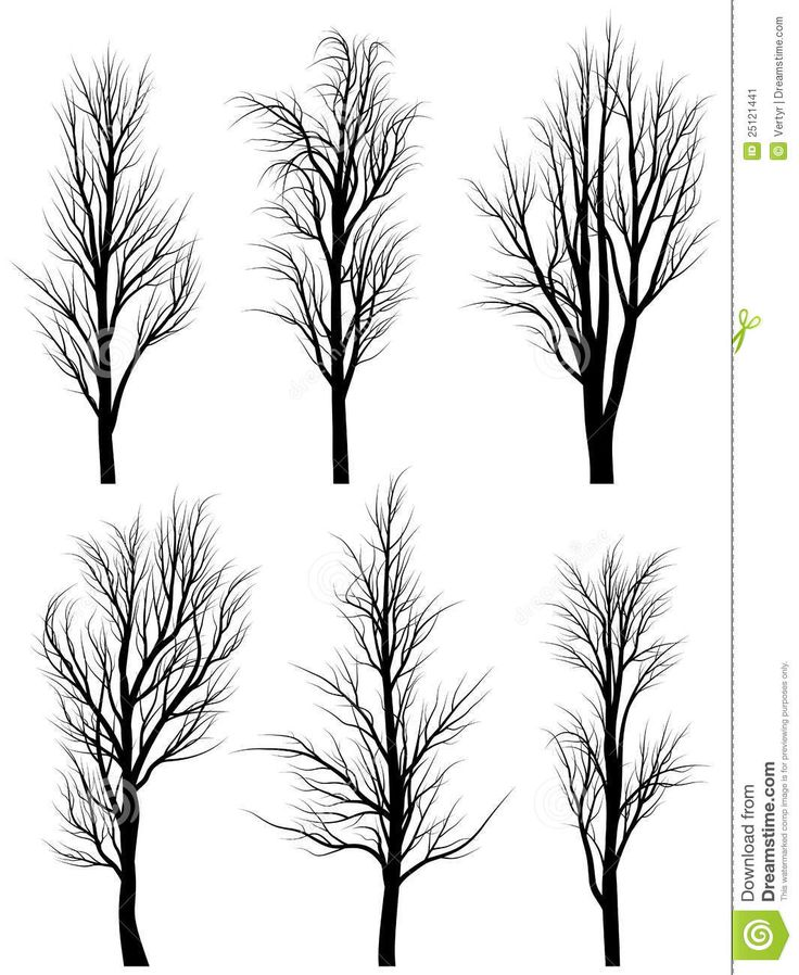 Silhouettes Of Birch Trees Without Leaves. - Download From Over 55 Million High Quality Stock Photos, Images, Vectors. Sign up for FREE today. Image: 25121441