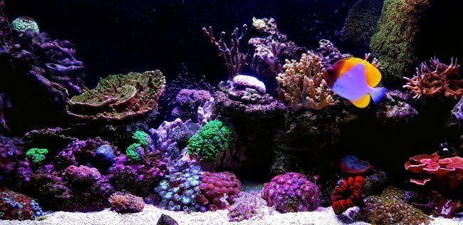 Pin On Aquarium Equipment
