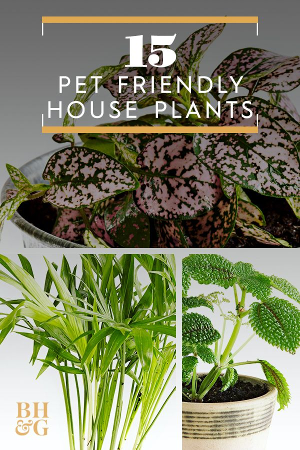 15 Pet Friendly Houseplants That Add Life To Your Home Without The Worry Large Indoor Plants Indoor Plant Care Safe House Plants