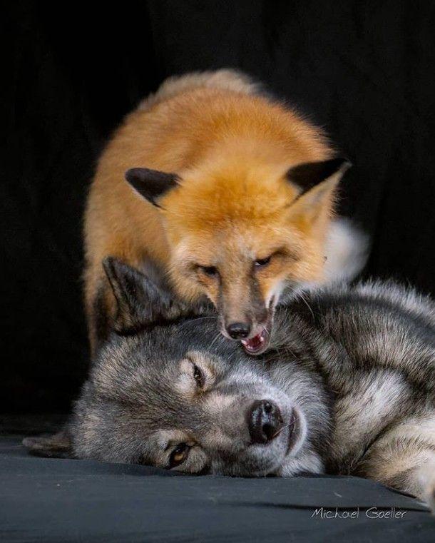расчёт брались смешная лиса и волк картинки обнаружить интересующую песню