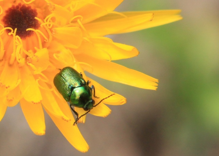 Small Bug on a Yellow Flower - Public Domain Photos, Free Images for Commercial Use