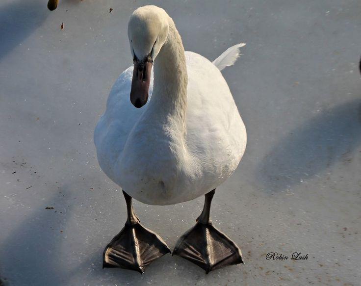 Do My Feet Look Too Big?