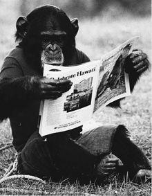 Nim Chimpsky, scimpanzé, ha imparato il linguaggio dei segni ed sa produrre numerose combinazioni di segni. Questa capacità è stata interpretato come prova di saper seguire un sistema grammaticale, ma la conclusione è stata poi contestata. L'analisi statistica di Yang: a differenza di quanto registrato nei bambini, la combinazione di segni utilizzati da Nim non raggiunge la variabilità che ci si aspetta per una grammatica basata su regole, ma anche dopo anni sembra basata su imitazione.