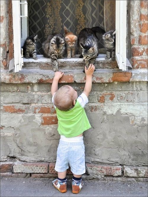 Sweet young lad enjoying all the felines on the window sill.
