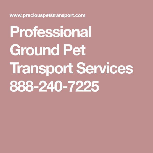 Professional Ground Pet Transport Services 888-240-7225