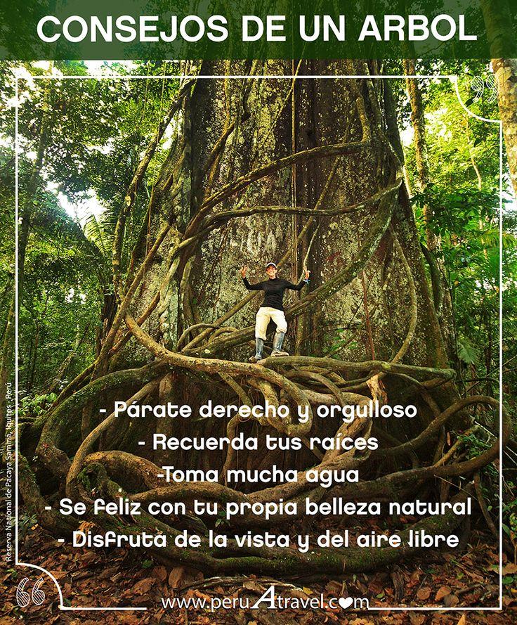 Consejos de un árbol: - Parate derecho y orgulloso. - Recuerda tus raíces. - Toma mucha agua. - Se feliz con tu propia belleza natural - Disfruta de la vista y el aire libre.