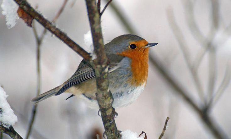 Nourrir les oiseaux du jardin en hiver !