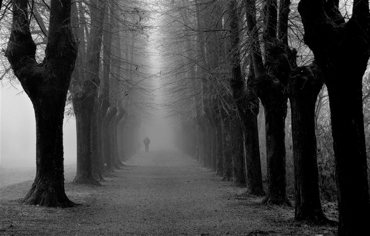 tree-lined street in the cold - null