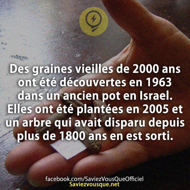 Des graines vieilles de 2000 ans ont été découvertes en 1963 dans un ancien pot en Palestine. Elles ont été plantées en 2005 et un arbre qui avait disparu depuis plus de 1800 ans en est sorti. | Saviez Vous Que?