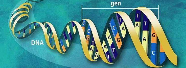 #Epigenetik (nicht nur) für Athleten. #Gesundheit #Ernährung #Fitness