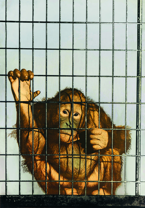 Scimmia in gabbia di michelangelo pistoletto gli - Michelangelo pistoletto specchi ...