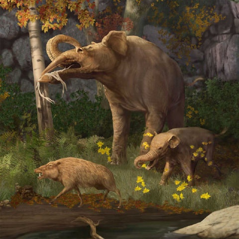 an overview of the dinosaur species from the ancient history History of triceratops dinosaur an overview of dinosaur species with long necks did you know that birds are actually thought to have evolved from dinosaurs this article enlists some ancient fliers and predecessors of modern birds share.