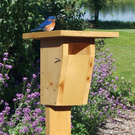 Creating A Bird Sanctuary Diy Bluebird House Animals