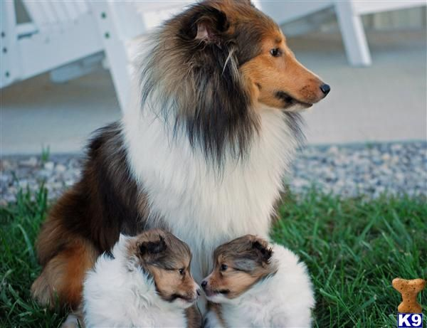 Looks just like my Quincy boy! :) And the cute puppies.