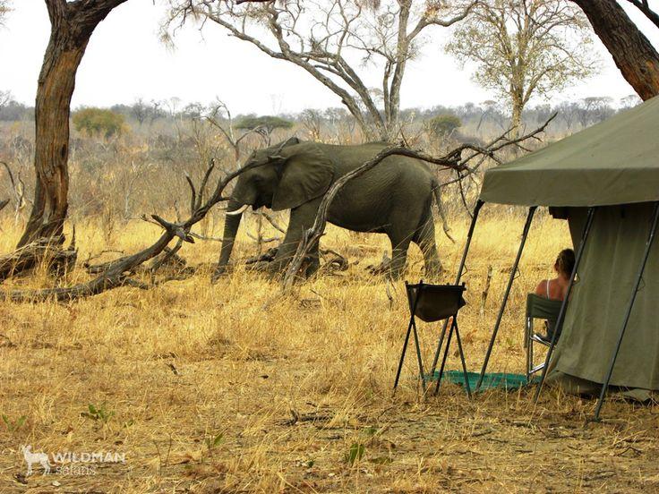 Hwange Mobile Camp, Zimbabwe. A mobile safari camp in a private, Hwange concession, offering wonderful wildlife and birding safari activities away from major tourist routes. #hwange #zimbabwe #africansafari #travelafrica #africa #travel