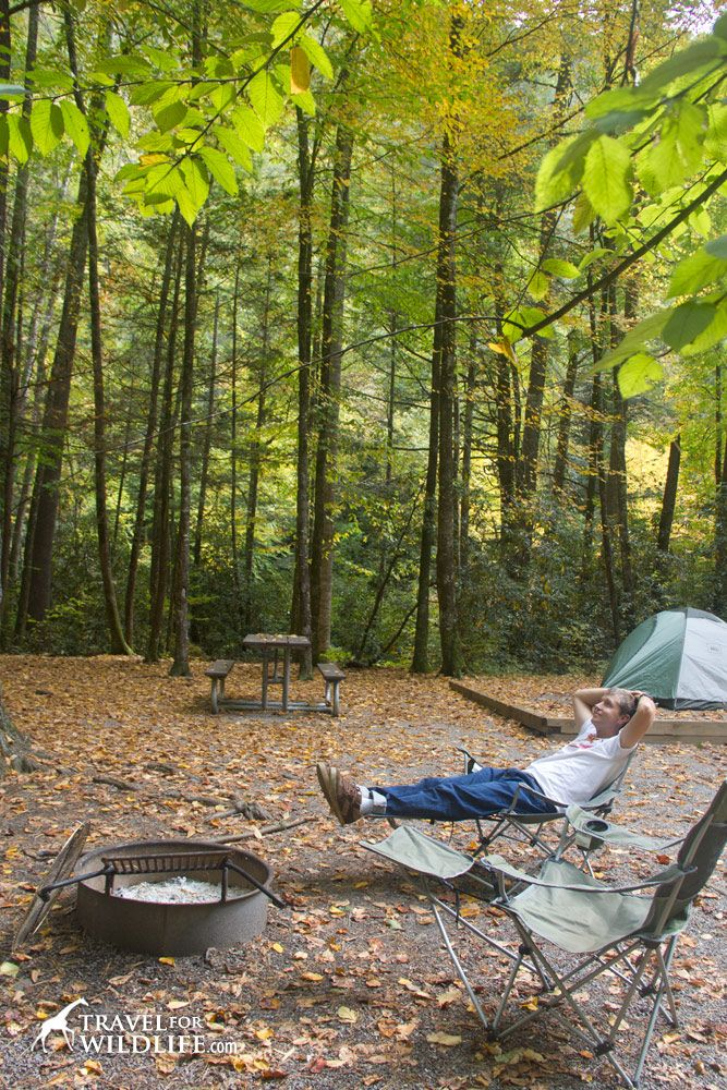 10 Best North Carolina Camping Images On Pinterest North
