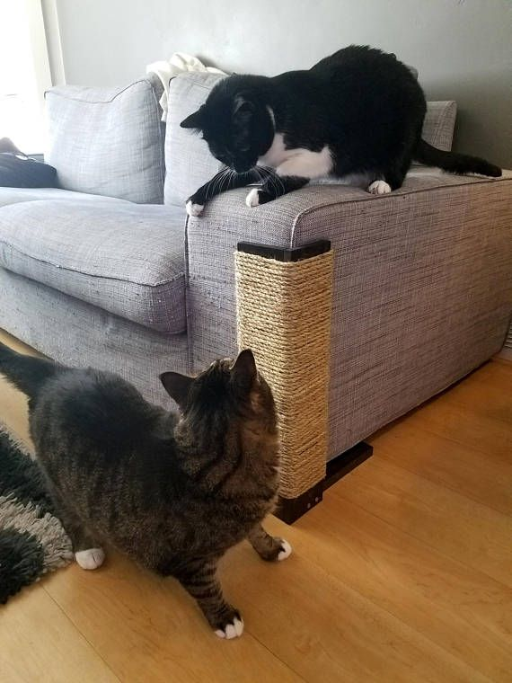 The 25 best tall cat scratching post ideas on pinterest for Kitty corner bed ideas