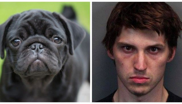 Man Who Beheaded 4 Dogs Gets Up To 28 Years In Prison