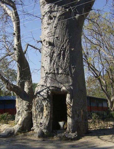 Strange toilet in a tree