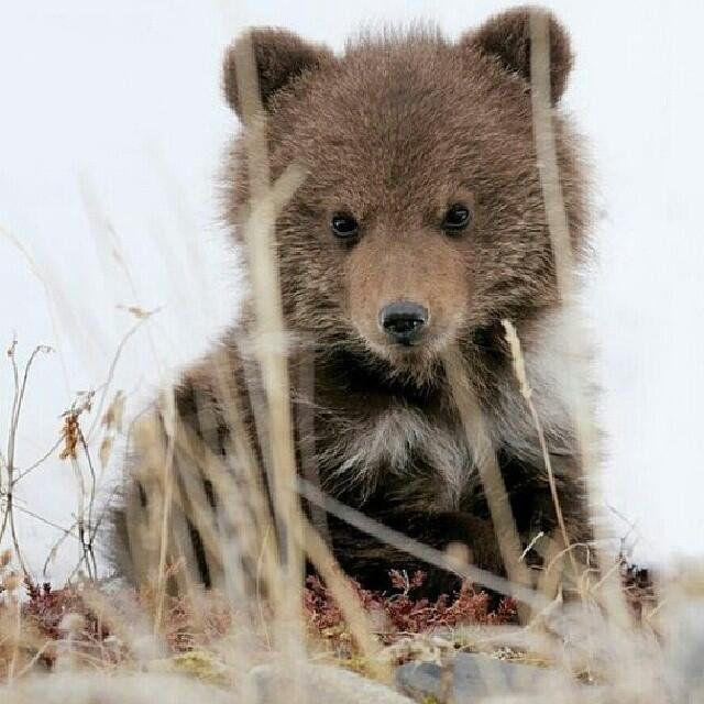 Mama Bear!!  Itz me Boo Boo Bear!!