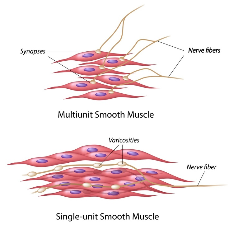 7 best My Articles images on Pinterest | Anatomy, Ap biology and Biology