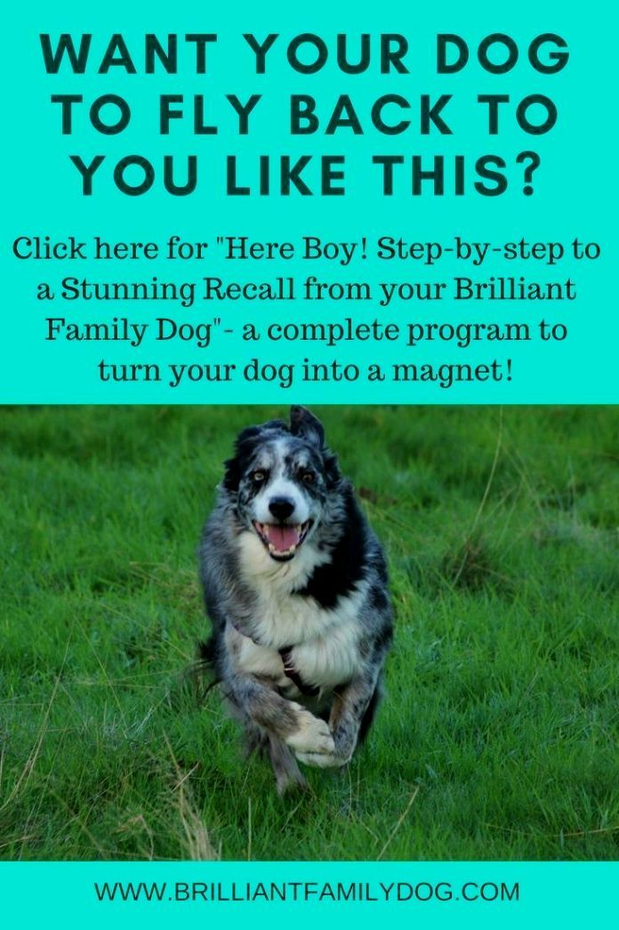 Dog Training Hacks Primary Reinforcement Is A Proven Principle