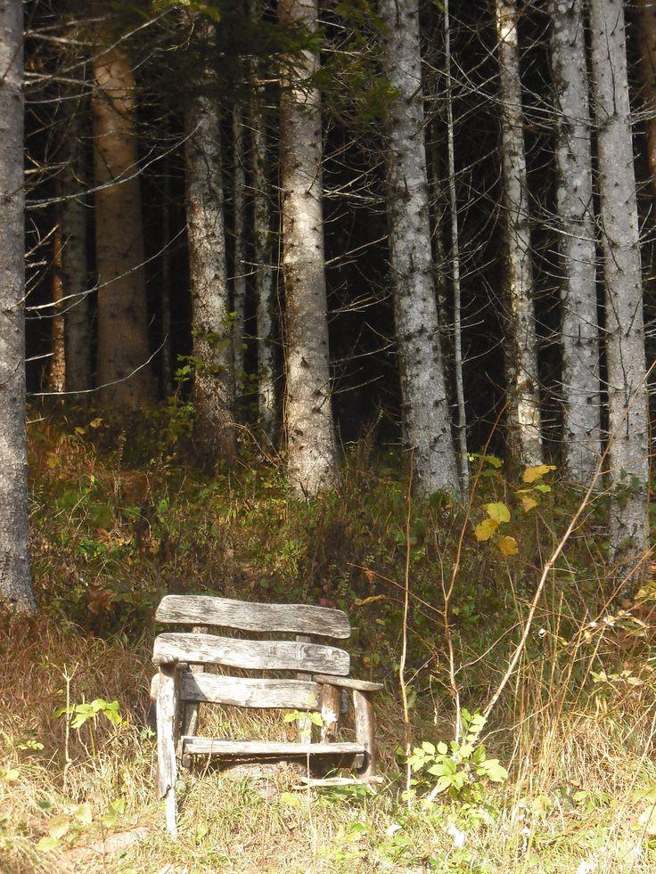 Der Thron...im Wald!